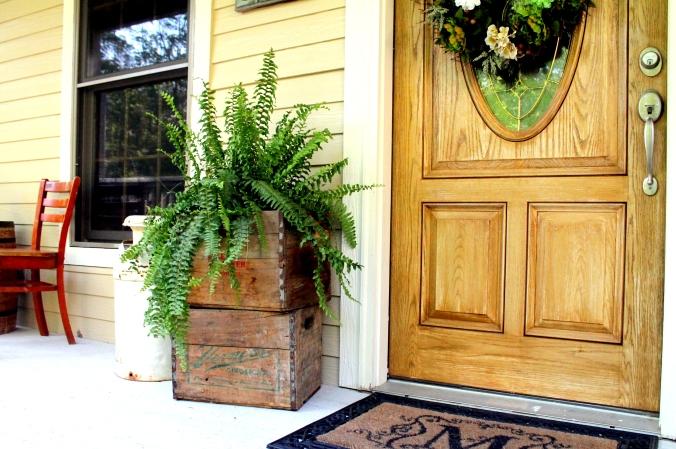 front door ferns
