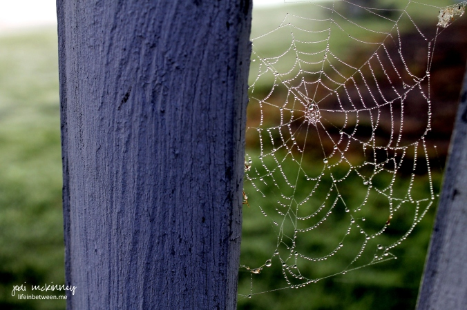spider web conneaut lake pa October 12 2014