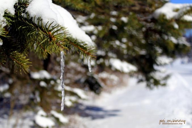 joy and sorrow winter pine snow icicle
