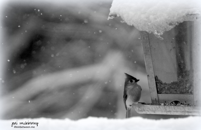 winter bird serenity monochrome