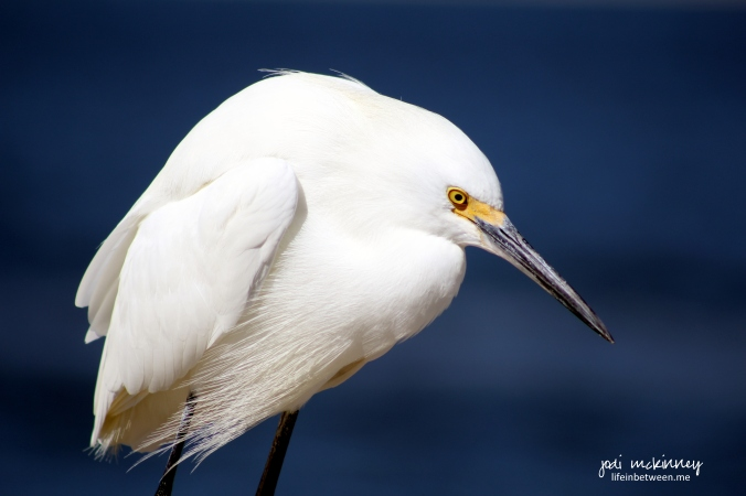 sanibel bird 2