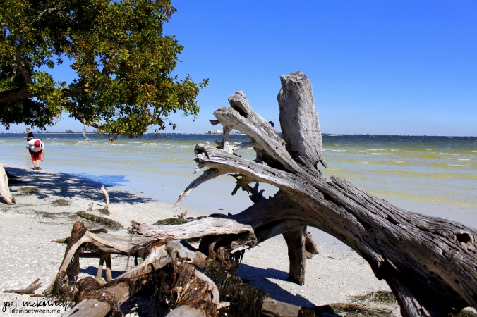 sanibel driftwood