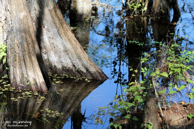 tree water reflection