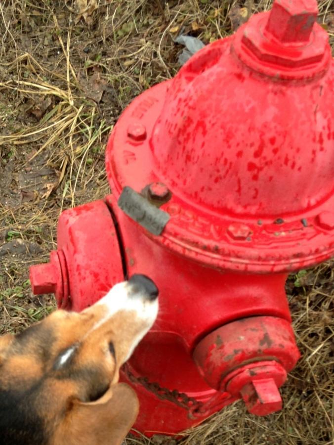 Mikey walk fire hydrant