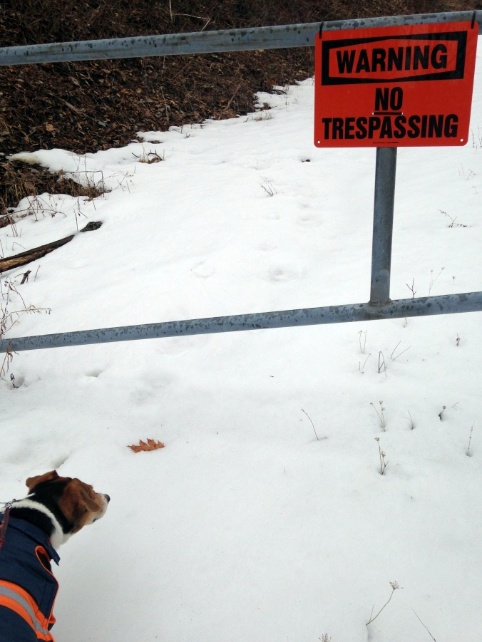 Mikey walk no trespassing