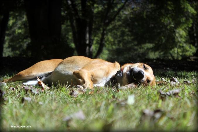 charlie autumn nap