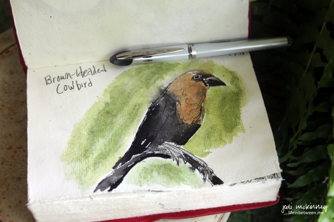 september draw a bird day cowbird art journal