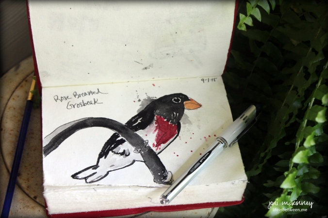september draw a bird day rose breasted grosbeak art journal