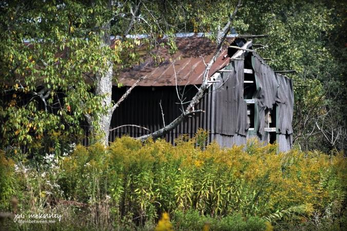 broken down barn autumn