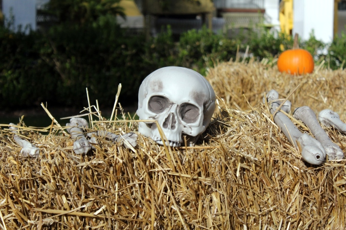 kf kids hay skeleton find