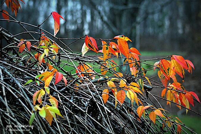 Autumns final act