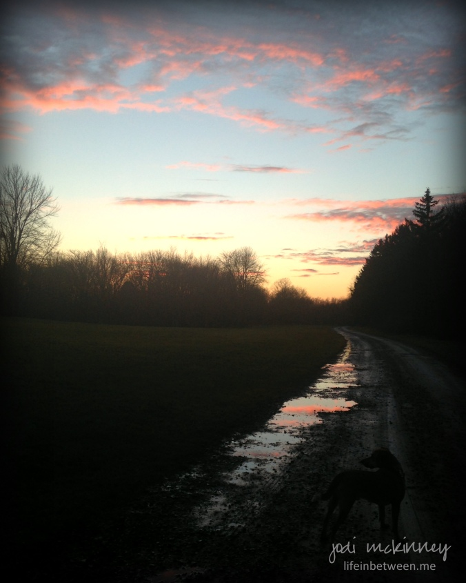 pink sky and puddles