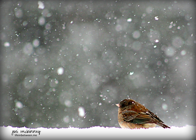 bird on snowy railing 011216
