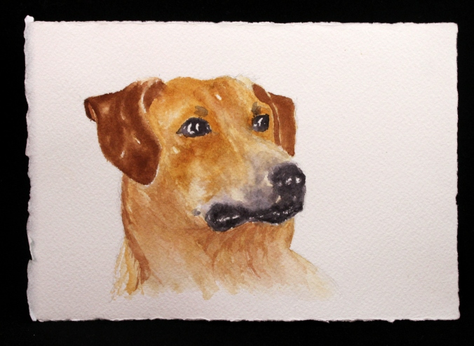 Charlie watercolor by Laura