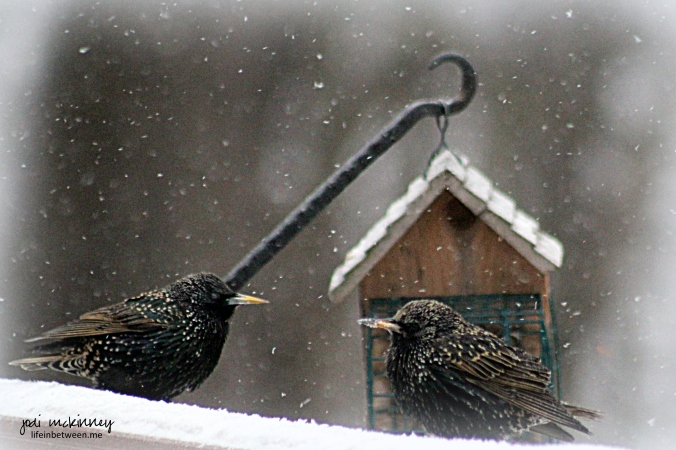 breakfast bird chatter