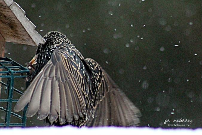 breakfast bird wings
