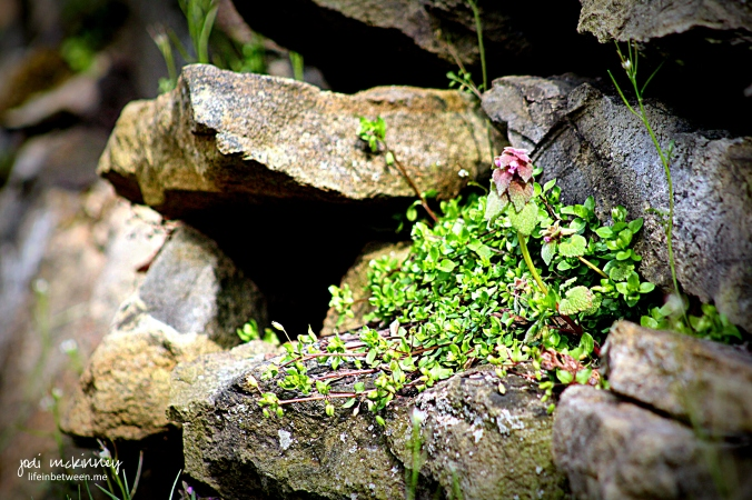 in the cracks stone wall flowers