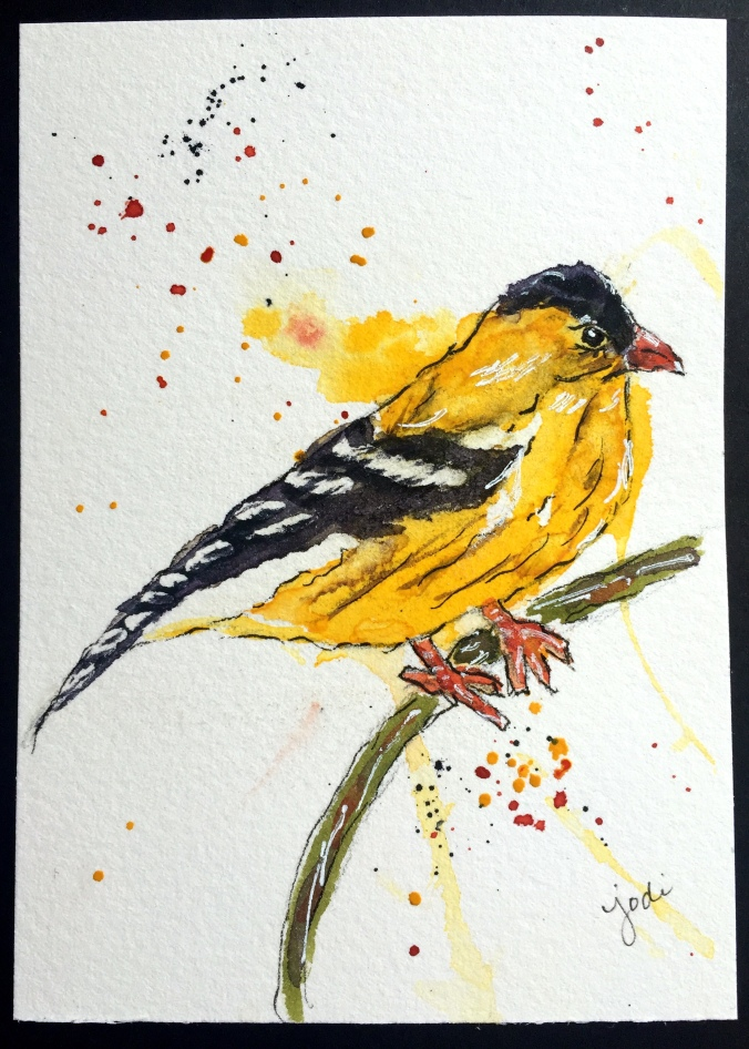 goldfinch watercolor drawabirdday