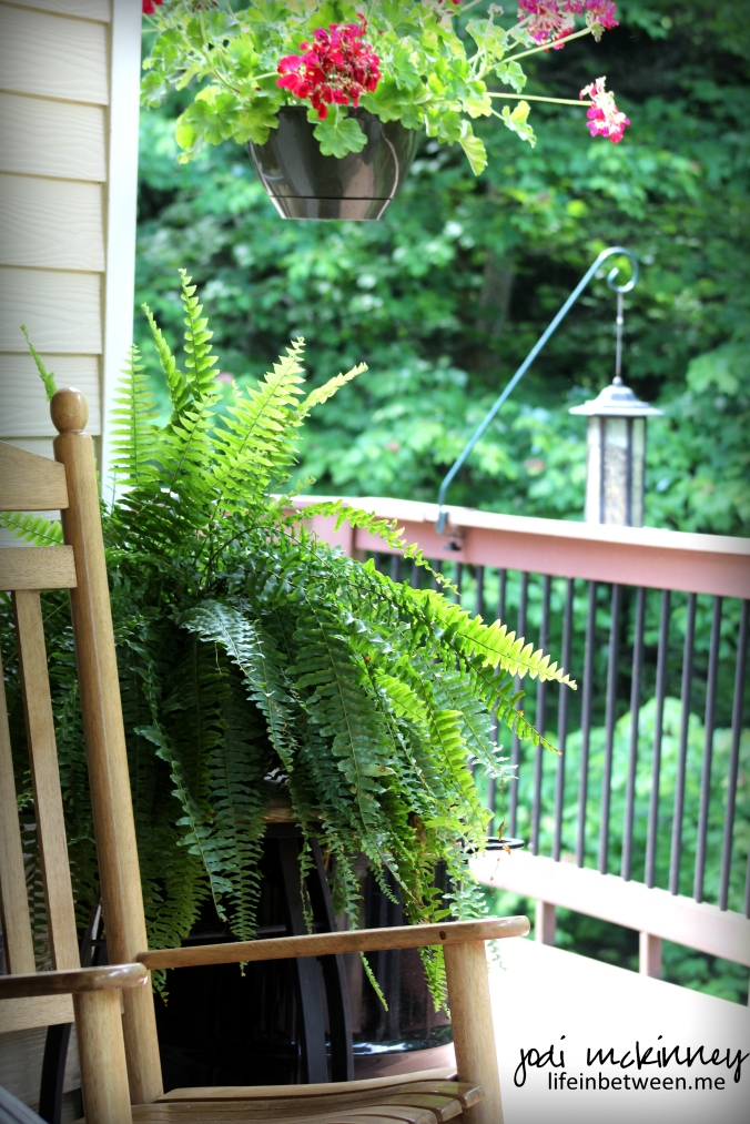 rocking chair and fern