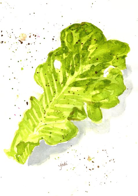 lettuce watercolor