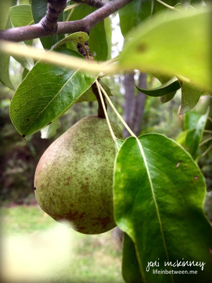 rocket pear taking off