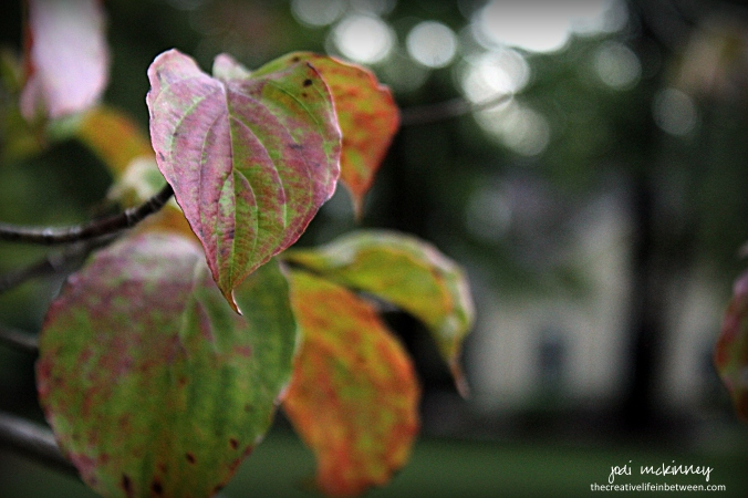 first-fall-leaves-the-old-dogwood-tree-0916-mars-pa