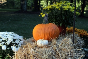 pumpkin-decorations