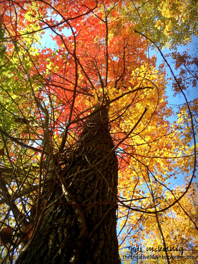 looking-up-autumn-tree-1016