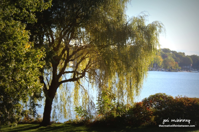 weeping-willow-conneaut-lake-october-9-2016