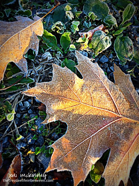 frosty-oak-leaf