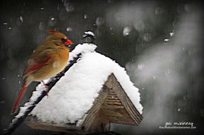 female-cardinal-in-the-snow-december-2016