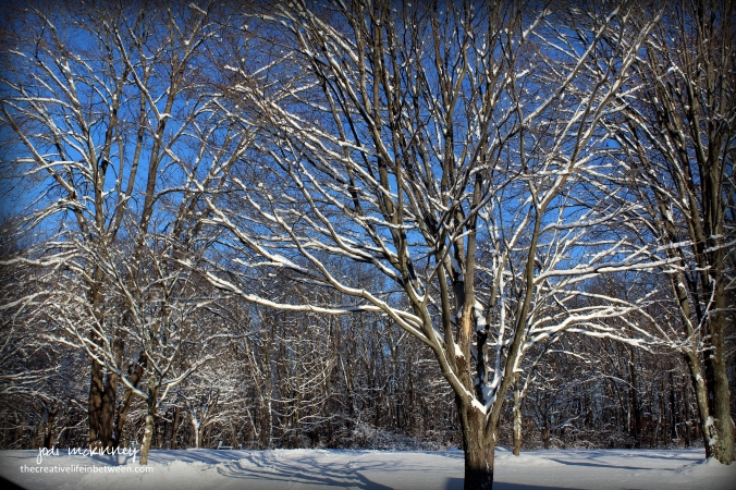front-yard-and-driveway-morning-after-snow-december-2016