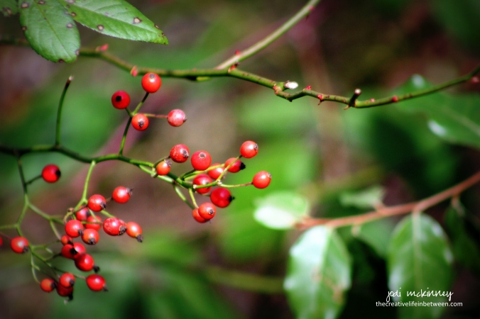 red-berries-103116