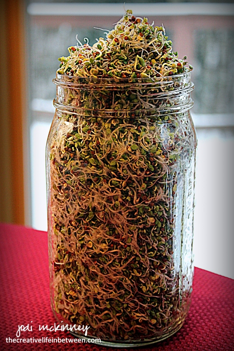 broccoli-sprouts-in-jar