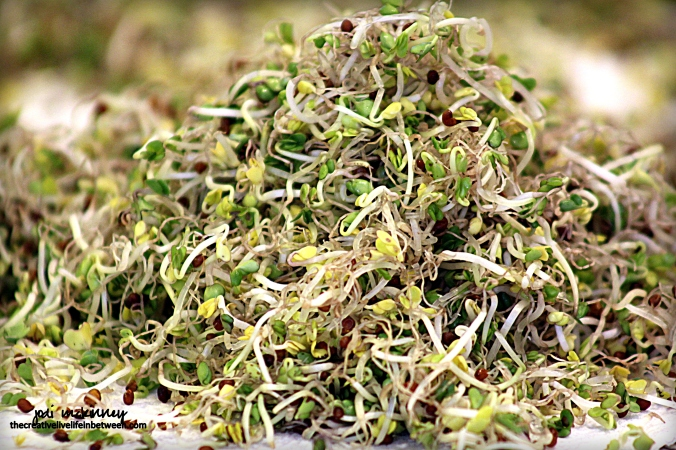 broccoli-sprouts-mound