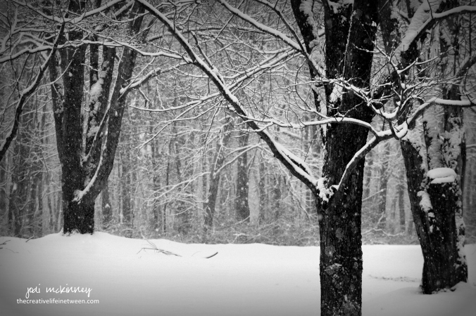 snowy-front-yard-black-and-white-0117