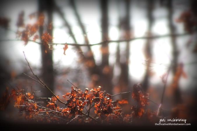 winter-oak-leaves-february-19-2017-mars-pa