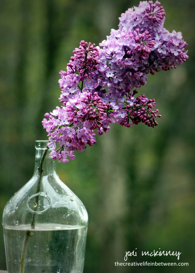 Purple Lilacs in Vase