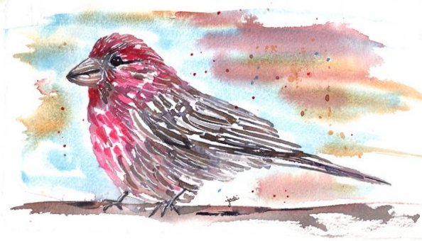 Purple Finch in Watercolor 5x10 140lb Saunders Cold Press