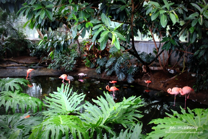 Flamingo Pond at the National Aviary, Pittsburgh, PA